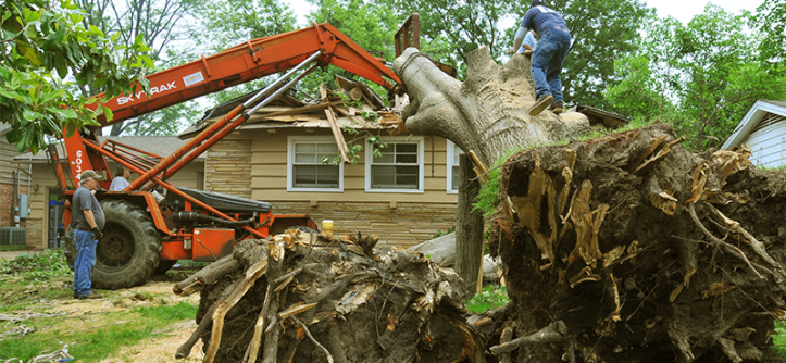 tree-removal-fema-600x300