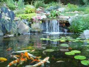 4 Pond Cleaning